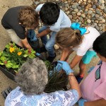 Mary Reines and the students decide how to best organize their plot.