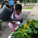 Watering the flowers!